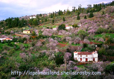 Almond blossom in Puntagorda, La Palma island